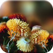 Autumn Flowers Live Wallpaper