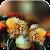 Autumn Flowers Live Wallpaper file APK Free for PC, smart TV Download
