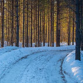 Forest road in Skattungbyn by Claes Wåhlin - Landscapes Forests ( skog, winter, skattungbyn, forest, road, dalarna,  )