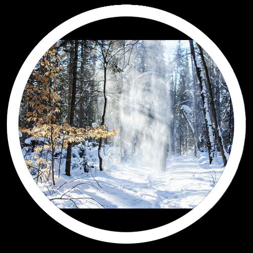 Hd Images Snowfall Forest LWP 個人化 App LOGO-APP試玩
