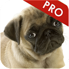 Dog Whistle pro icon