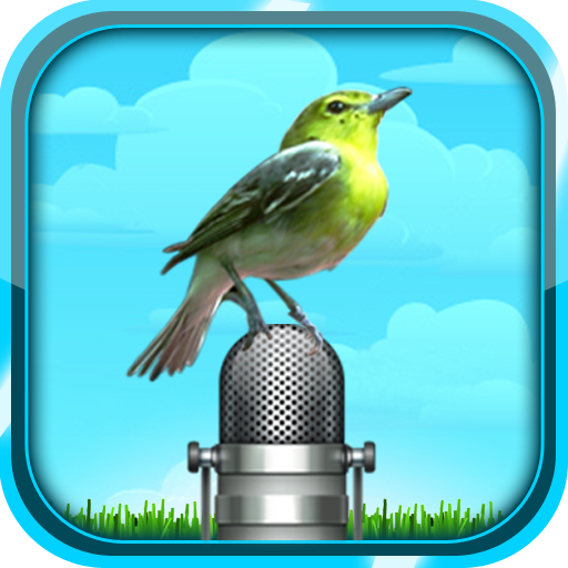 Bird Sound and Picture