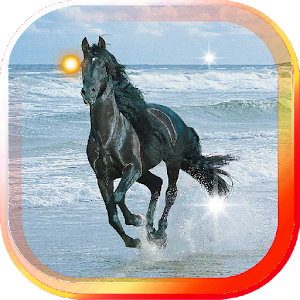 Horse Sea Beach live wallpaper