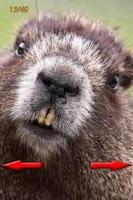Screenshot of Funny Animals Photo