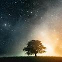 Artistic Tree Stars LWP icon