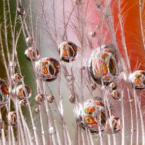 ... by Hale Yeşiloğlu - Abstract Macro ( bubble, macro, drop, bubbles, father,  )