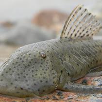 Biodiversidad Afectada por la Represa el Quimbo