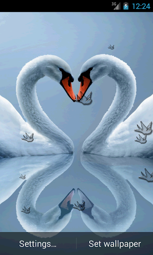 玩娛樂App|Love Bird Live Wallpaper免費|APP試玩