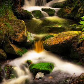Magic stream | Czech Rep by Pavel Aberle - Nature Up Close Water
