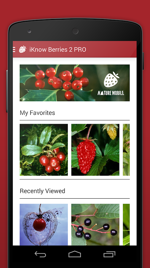 Wild Berries and Herbs 2 LITE - screenshot