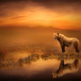 A Lion's World by Jennifer Woodward - Digital Art Animals ( water, lion, nature, wild animals, sunset, reflections, wildlife, sunrise, landscape )