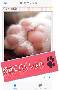 Cat paws Photo collection screenshot 4