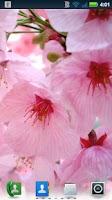 Screenshot of Cherry Blossoms Wallpaper