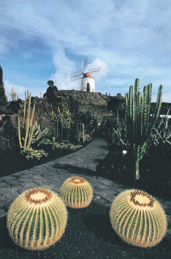 Cactus-Garden-Guatiza-Canary-Islands - A windmill stands watch over the Cactus Garden in Guatiza, in the municipality of Teguise in the northeastern part of the island of Lanzarote in Las Palmas province in Spain's Canary Islands.
