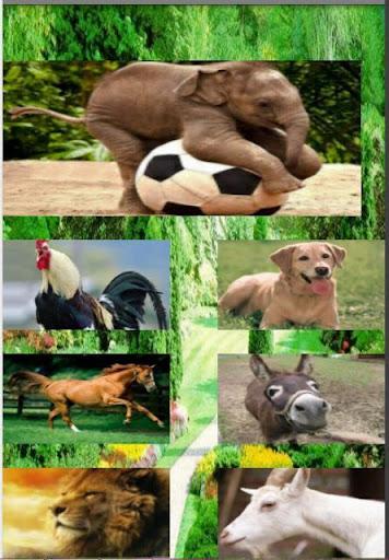 Cocuk Oyunu Hayvan Sesleri
