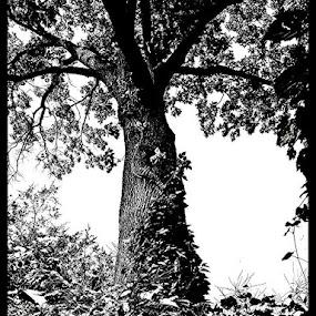 by Samuel Dean - Black & White Flowers & Plants