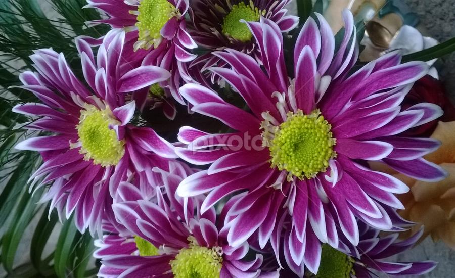 Chrysanthemum by Biljana Nikolic - Instagram & Mobile Other ( purple, yellow, color, , Flowers, Flower Arrangements )