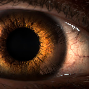 Human Aperture Program by Alberto Ghizzi Panizza - People Body Parts ( detail, pupil, iris, light, aperture, eye, human, eyes, beauty )
