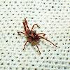 Free-Living Mite