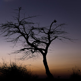 Sunset Silhouette by Adit Lal - Landscapes Sunsets & Sunrises ( hills, nandhi, silhouette, color, sunset, night )