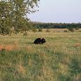 Wildlife of the Wichita Mountains Wildlife Refuge