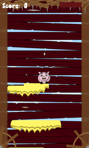 Rollo The Pig