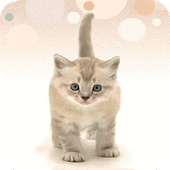 Cute Kitten Live Wallpaper
