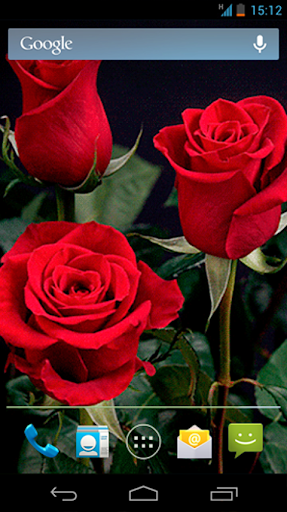 玫瑰 动态壁纸