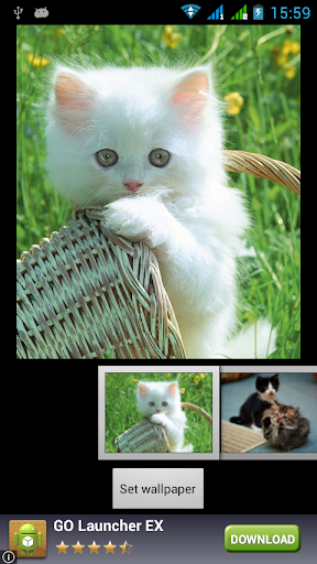 有趣的貓動態壁紙