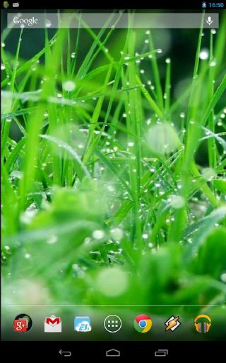 Live Grass HD