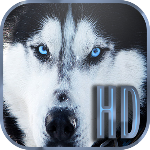 Dogs Wallpapers Galaxy s6 個人化 App LOGO-APP試玩