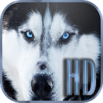 Dogs Wallpapers Galaxy s6