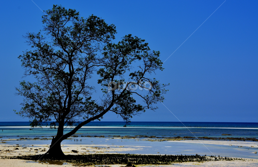 by Scuba Kars - Nature Up Close Trees & Bushes (  )