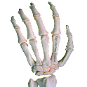 Rays Anatomy Skeletal System logo