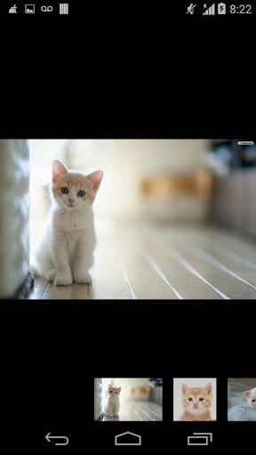 wallpaper cute cat