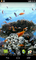 Screenshot of Sea fish Video Live Wallpaper