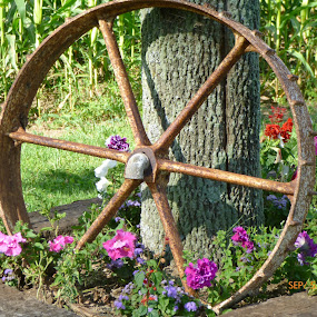 Wagon Wheel and Flowers by Annette Long-Soller - Artistic Objects Industrial Objects ( tree, grass, wagon wheel, beauty in nature, flowers )