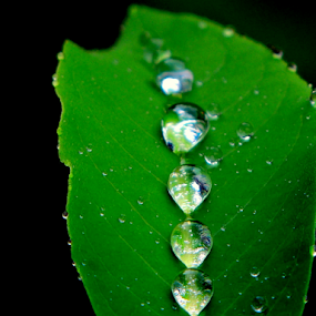 Diamonds on velvet by Yusop Sulaiman - Nature Up Close Water (  )