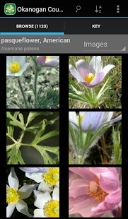 1900 BC Canada Wildflowers- screenshot thumbnail