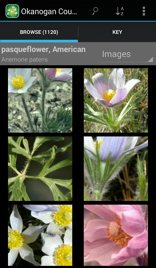 1900 BC Canada Wildflowers- screenshot