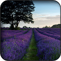 Lavender Wallpapers icon