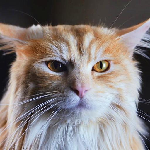 Super Cat-Dog Live Wallpaper