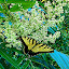 butterfly by Richard Wright - Instagram & Mobile iPhone ( butterfly, sunday, bug, mississippi,  )