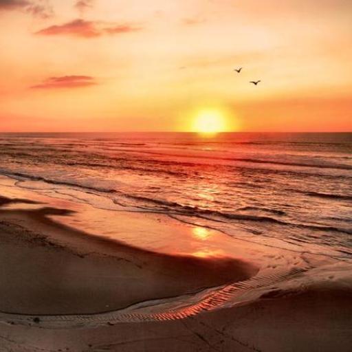 300 Amazing Beach Pictures HD LOGO-APP點子