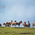 Mammals of Qinghai, China