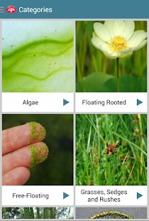 Aquatic Plants- screenshot thumbnail