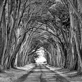 Pt. Reyes by Lou Plummer - Black & White Landscapes ( black and white, california, trees, road, tunnel, , b&w, landscape )