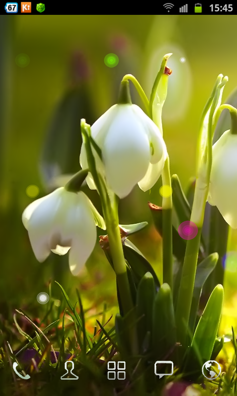 White Flowers HD Wallpaper - screenshot