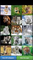 Screenshot of Big Cats HD Wallpapers