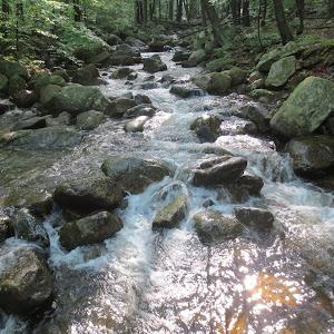 Brook Yellow Trail Harriman State Park June 2014 053.JPG